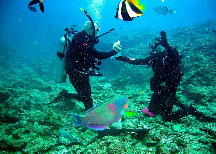 Корраловые рифы и дайвинг в океане