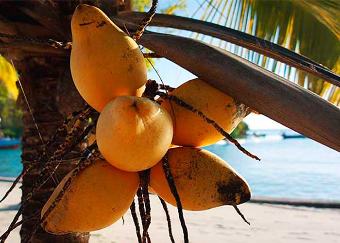 Занзибарский кокос