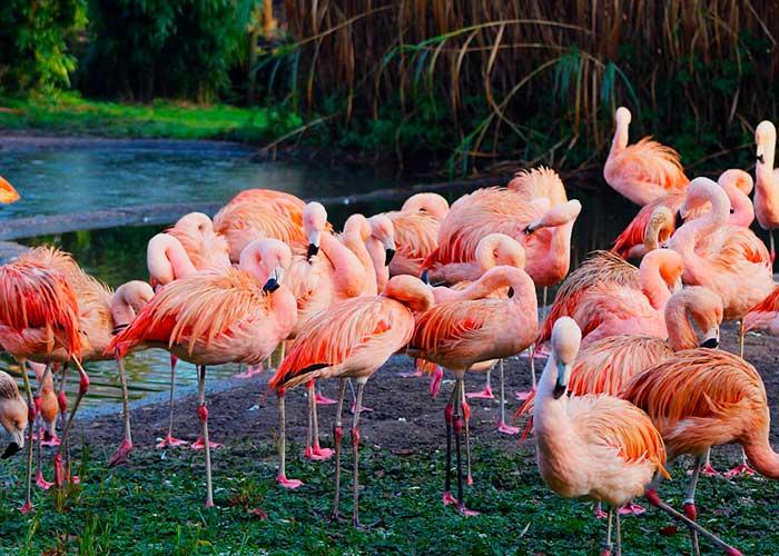 Фламинго в национальных парках Африки