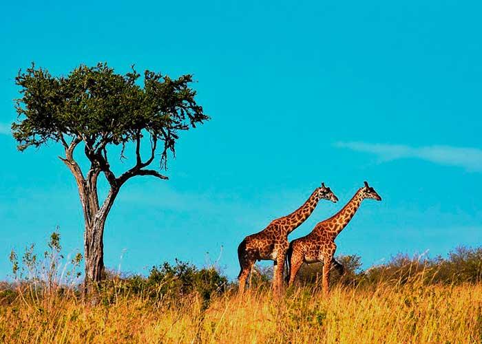 Сафари в саванне, медовый месяц в Танзании