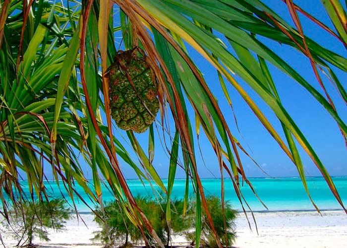 Острова Пемба, Медовый месяц в Африке