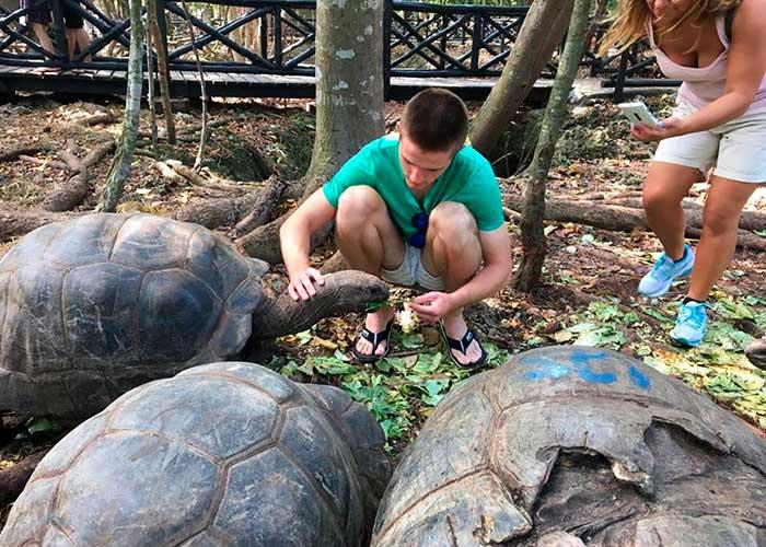 Сейшельские черепахи Танзании, медовый месяц на Занзибаре