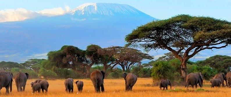 Килиманджаро - парк, который хотят увидеть все
