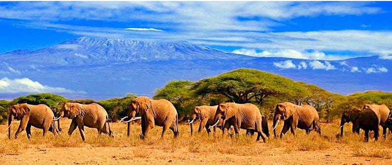 Погода в Танзании по месяцам