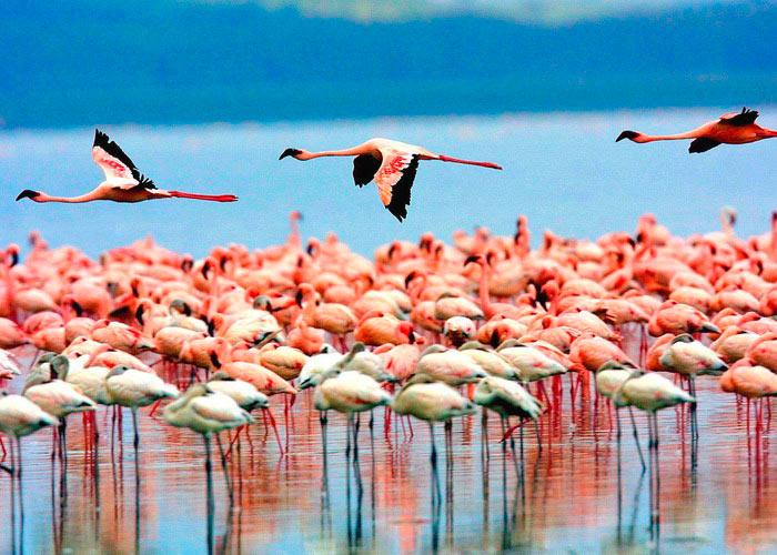 Парк озеро Маньяра рай для птиц - фото