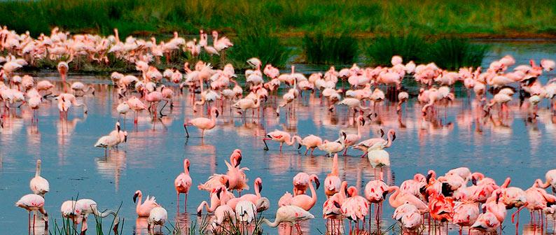 Парк озеро Маньяра-рай для птиц