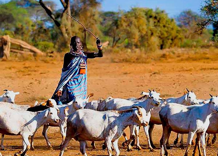 Колоритные масаи