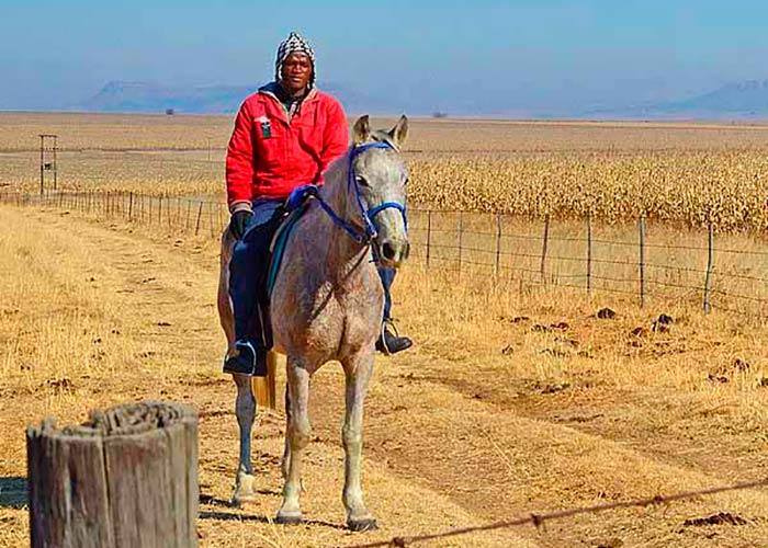 Африканские конные прогулки