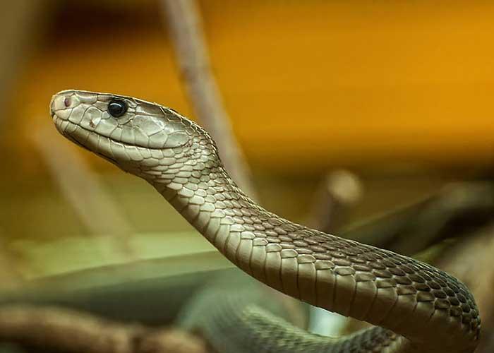 Каких змей стоит опасаться на Занзибаре? - фото