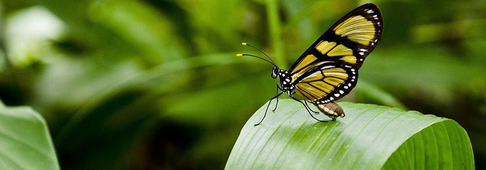 Парк бабочек на Занзибаре