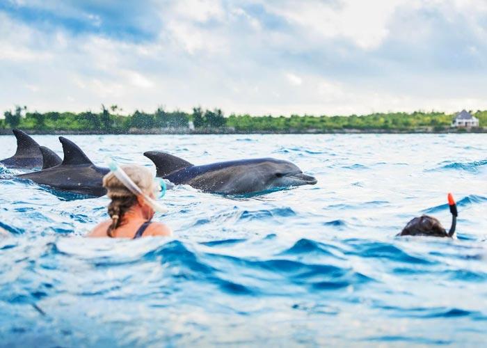 Дельфины в Кизимкази - фото