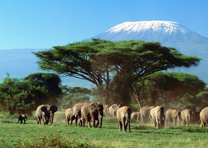 Мифы об Африке (или не ходите дети в Африку гулять) - фото