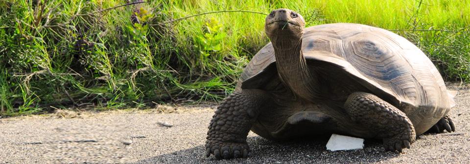 Пристанище гигантских черепах - остров Призон