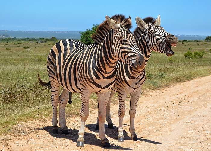 Национальный парк Катави - фото